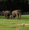 whipsnade zoo elefant