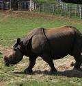 whipsnade zoo rino